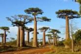 Wanilia pachnie Madagaskarem