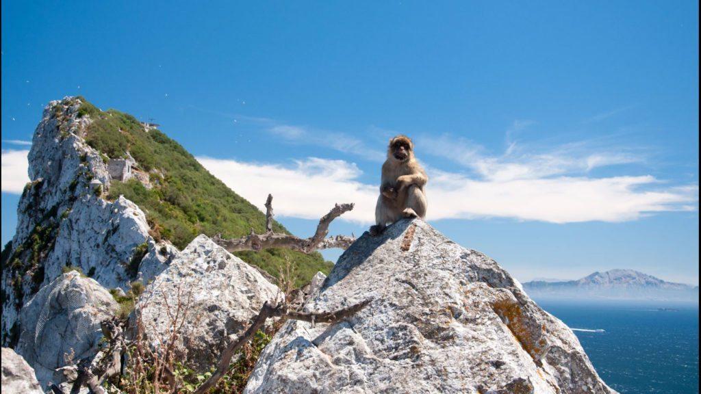 Gibraltar - małpy makaki