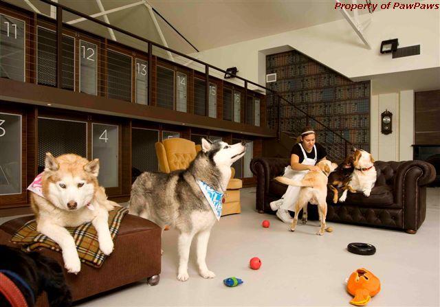 hotele dla zwierząt