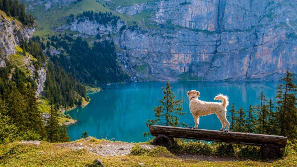 Wczasy z psem w górach