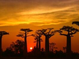 Madagaskar - fauna i flora